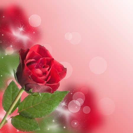 red roses with bokeh and copy space  photo