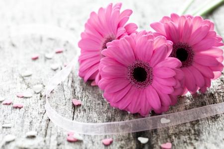 pink gerber on wooden background Standard-Bild