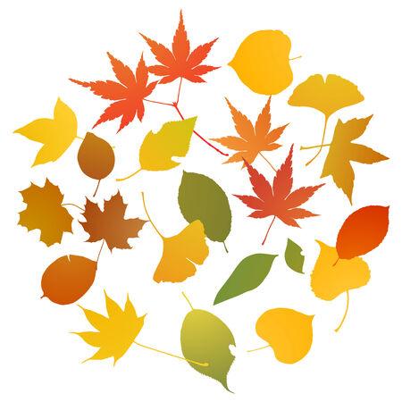 Autumn leaves Imagens - 31536857