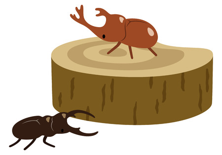 insect: Insect collecting beetles stag Illustration