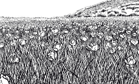 Flowery Meadow. Black and white version