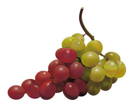 bandera de portugal: Uvas con los colores de la bandera portuguesa Portugal