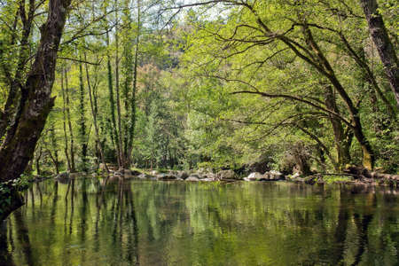 Forest River - Portugal Stock Photo - 8030482