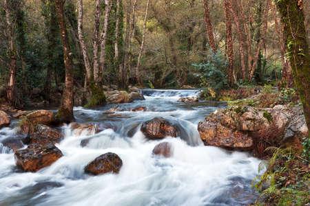 River Under Trees - Autumn III photo