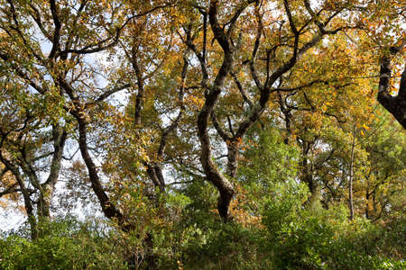 Autumn Backlit Background