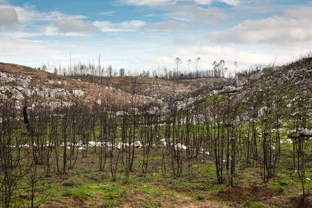 Burn Land II Stock Photo