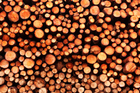 Pine Wood Pile Stock after a rainy day. Stock Photo - 9030870