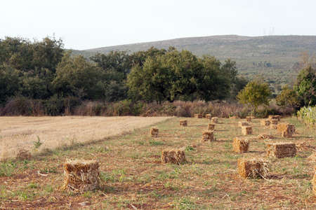 Small field of straw bales against woods and hill photo