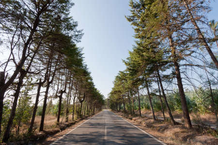 Tarmac road with trees on both edges in Portugal Stock Photo