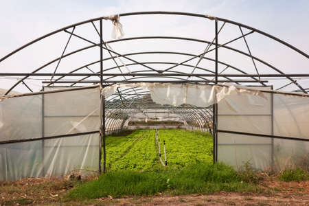 Portuguese greenhouse without roof and degraded state