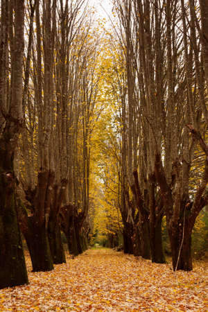 Way through trees with autumn leaves covering ground Stock Photo