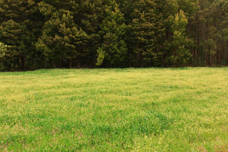 Green grass field against forest without sky Stock Photo