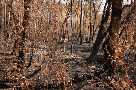 Background of burned trees and wild vegetation under sunlight Stock Photo - 13417603