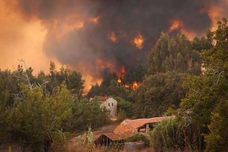 wildfire: Forest Wild fire near houses on Portugal Summer