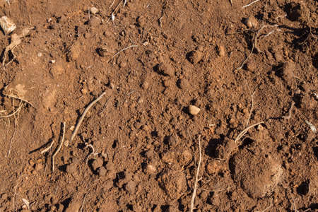 Dry soil texture background with rocks and roots photo