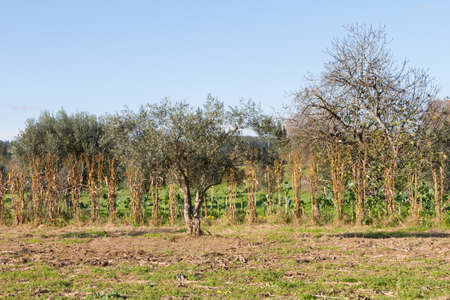 close-up view of some rural portuguese crops
