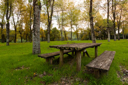 Wooden table and bench in a forest park