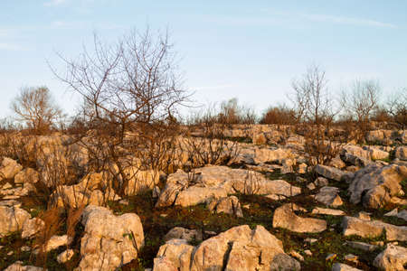 dismal: Burned plants among rocks against blue sky