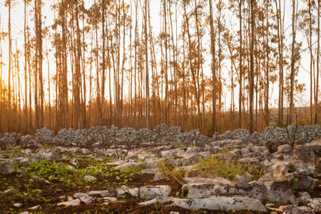 Trees behind rocky wall during suntset hour Stock Photo