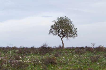 Alone tree on grassy meadow and cloudy sky
