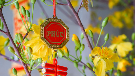 photgraphy: Apricot blossom and gold decor on blossom tree at new year Stock Photo