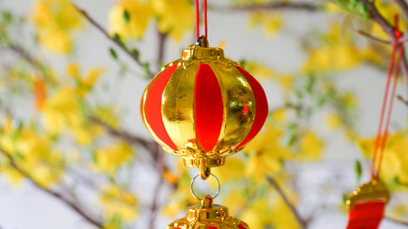 photgraphy: Apricot blossom and gold decor on blossom tree at new year\\\\\\\\\\\\\\\\\\\\\\\\\\\\\\\\ Stock Photo