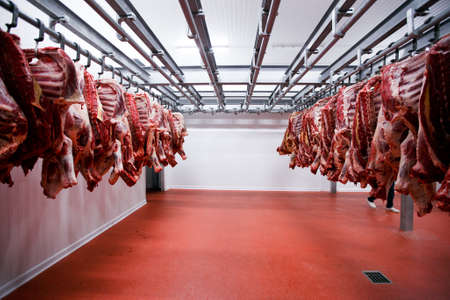 Image of a half beef chunks fresh hung and arranged in a row in a large fridge in the fridge meat industry. Фото со стока