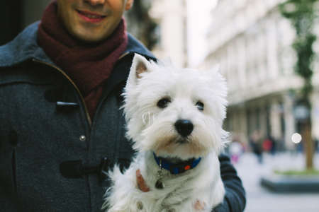 Closeup of man holding a West Highland White Terrier