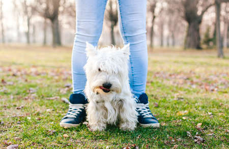 dogie: West Highland White Terrier standing between girls legs