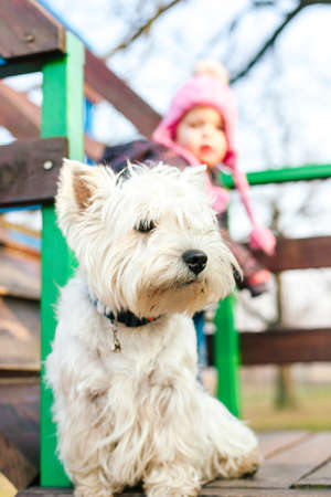 West Highland White Terrier and little girl behind Stock Photo