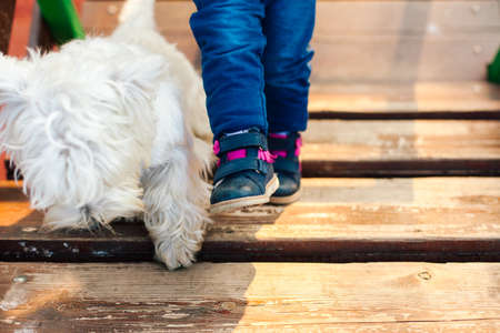 Closeup of childs legs and dog Stock Photo
