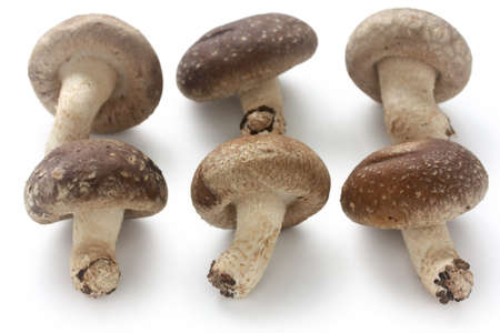 shiitake, japanese mushrooms photo