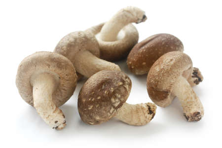 shiitake, japanese mushrooms