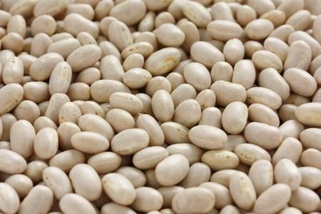 common bean: white navy bean Stock Photo