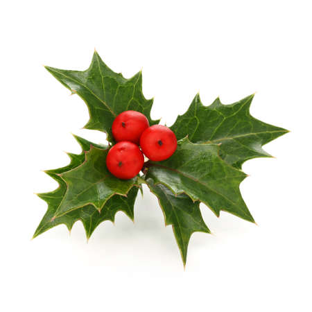 twig: holly berry sprig, christmas symbol Stock Photo