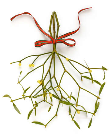 twig: christmas mistletoe, kissing ball Stock Photo