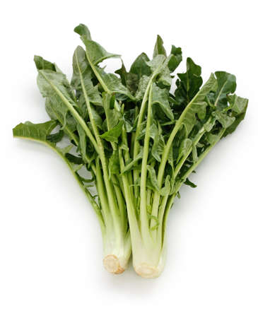 chicory: chicory catalogna frastagliate, italian leaf vegetable