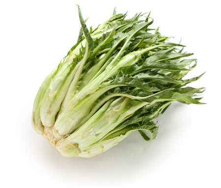chicory: puntarelle, asparagus chicory, italian winter vegetable