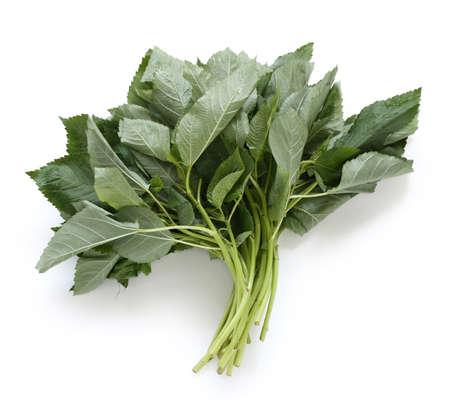 mallow: molokhia, egyptian spinach