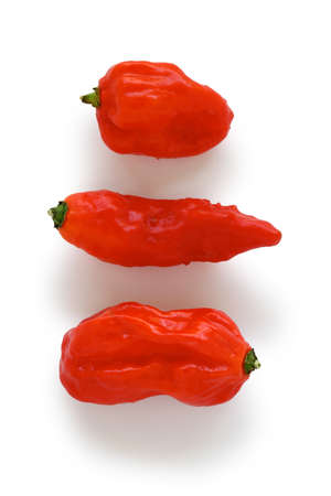 hottest: bhut jolokia, the hottest pepper in the world