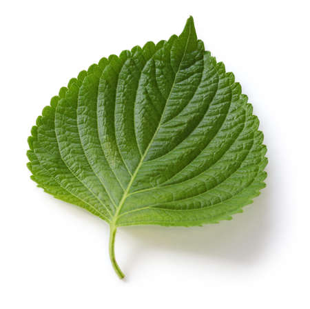 edible leaves: perilla leaf,egoma Stock Photo