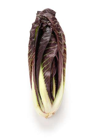 chicory: radicchio treviso precoce, italian red leaf chicory