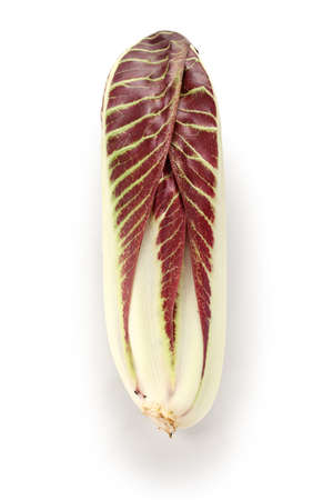 radicchio treviso precoce, italian red leaf chicory photo