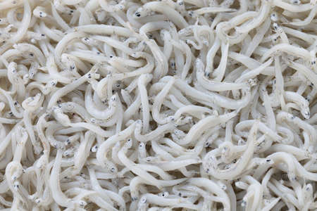 anchovy fish: boiled whitebait, japanese food Stock Photo
