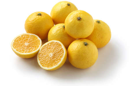 湘南ゴールド、日本の新しい柑橘類、ミカンと黄金のハイブリッド シトラス オレンジ。 写真素材 - 19292263