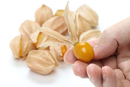 husk: physalis, comestible tomate de c�scara