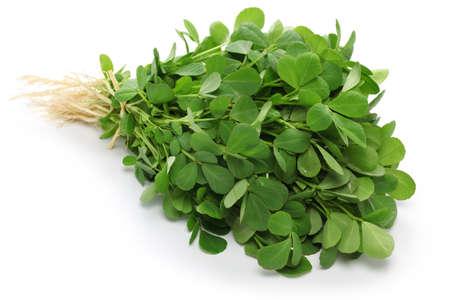 methi: methi, fenugreek leaves isolated on white background Stock Photo