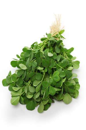 methi, fenugreek leaves isolated on white background Zdjęcie Seryjne