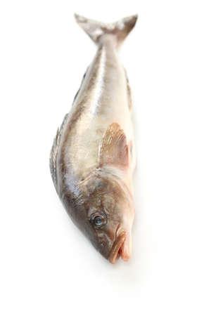 greenling: arabesque greenling, okhotsk atka mackerel, hokke, japanese fish Stock Photo