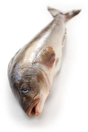 arabesque greenling, okhotsk atka mackerel, hokke, japanese fish Stock Photo